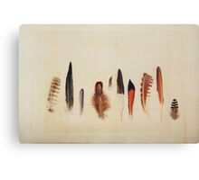 Feather Study no. 1 Canvas Print