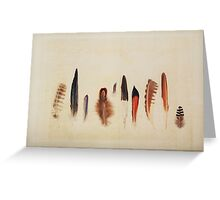 Feather Study no. 1 Greeting Card