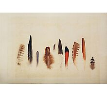 Feather Study no. 1 Photographic Print