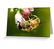 Honey Bee with flower Greeting Card