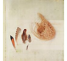 Feather Study no. 2 Photographic Print