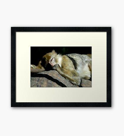 Sleeping Monkey Framed Print