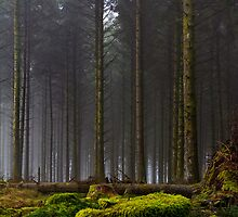 Standing Tall by AndyCosway