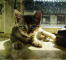 Kitten in the Sun by © Kira Bodensted