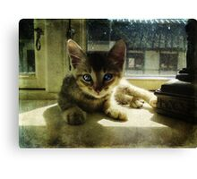 Kitten in the Sun Canvas Print