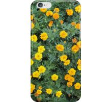 Top view of a big flower bed of yellow flowers iPhone Case/Skin