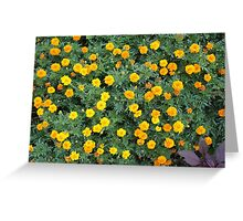 Top view of a big flower bed of yellow flowers Greeting Card