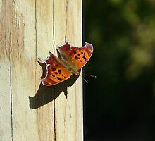 Orange Moth by Michael  Herrfurth