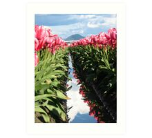 Pink Tulips in Skagit Valley Art Print