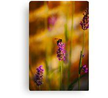 Bee on lavender Canvas Print
