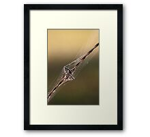 Wrapped for Christmas Framed Print