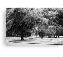 The Old Weeping Willow Tree Canvas Print