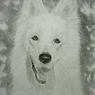 White Swiss Shepherd by Istvan Natart
