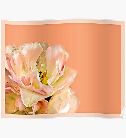 Peaches and Cream Flower Design Poster