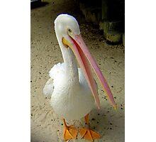 Do Pelicans Smile? Photographic Print