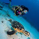 Turtle by Carlos Villoch