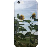 Sunflowers With a Blue Sky iPhone Case/Skin