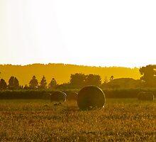 Hay bales @ dawn by Ali Brown