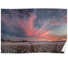 Cotton Candy Above the Cotton Field Poster