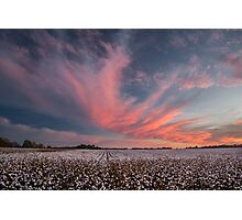 Cotton Candy Above the Cotton Field Photographic Print