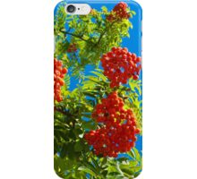 Rowan tree  with red berries iPhone Case/Skin