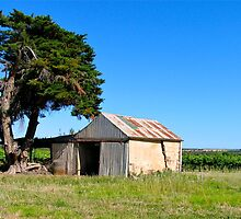 The Old Shed... Willunga, Australia by Ali Brown