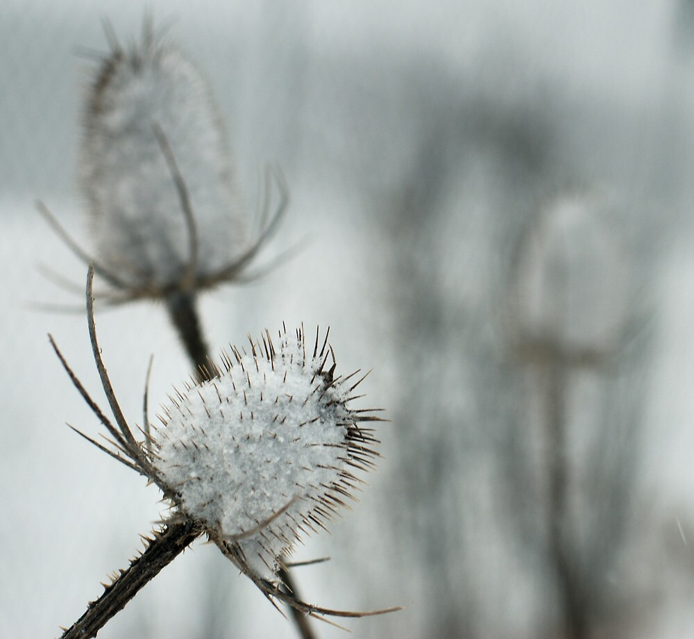 Winter Blues by kimmac