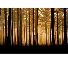 Fog Fantasy Photographic Print