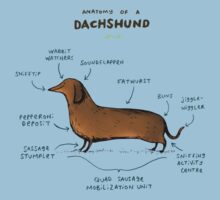 Anatomy of a Dachshund Kids Clothes