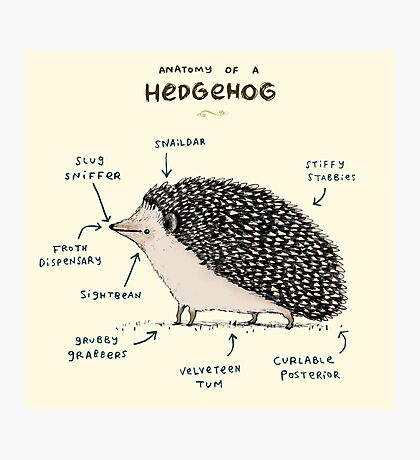 Anatomy of a Hedgehog Photographic Print