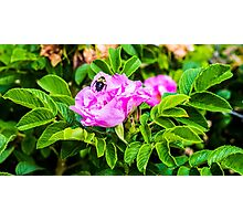 Flower And Bee Photographic Print