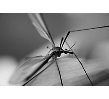 Alien Insect Photographic Print