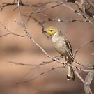 At The Waterhole ... White-plumed Honeyeater by Kerryn Ryan, Mosaic Avenues