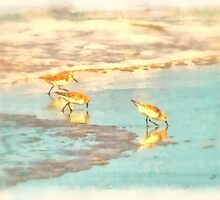 Sandpipers Along the Shore - Digital Painting by Betsy Foster Breen
