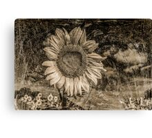 Vintage Sunflower  Canvas Print