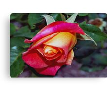 Peach rosebud Canvas Print