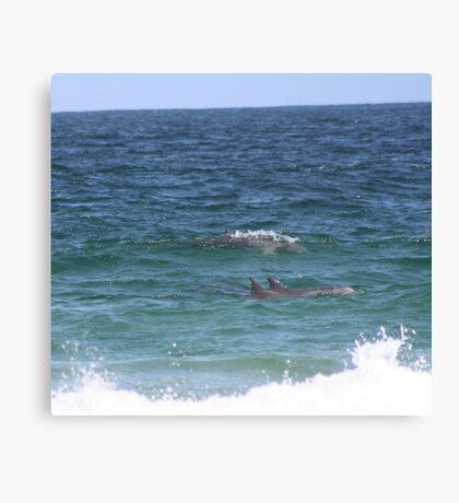 Dolphins at Zenith Beach Canvas Print