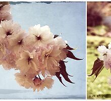 Cherry Blossom Dreaming by michellerena