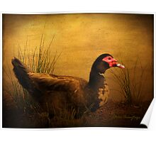 Maurice the Muscovy Poster