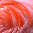 Flamingo Flame by naturalnomad