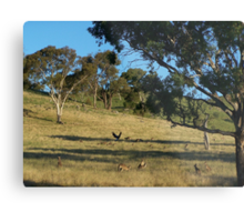 Just before dusk, south of Cook in Canberra.- Australia. Metal Print