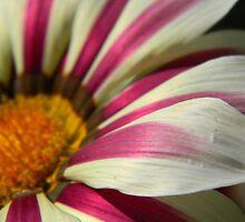 Petals by Leyla Hur
