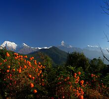 View from Potana, Nepal. by Andy Newman