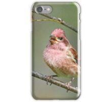Purple Finch iPhone Case/Skin