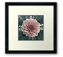 Close up Dahlia square format Framed Print
