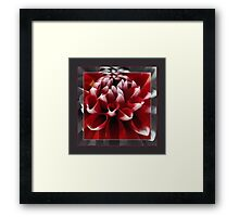 Dahlia square format Framed Print