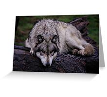 A wolf on a wet log Greeting Card