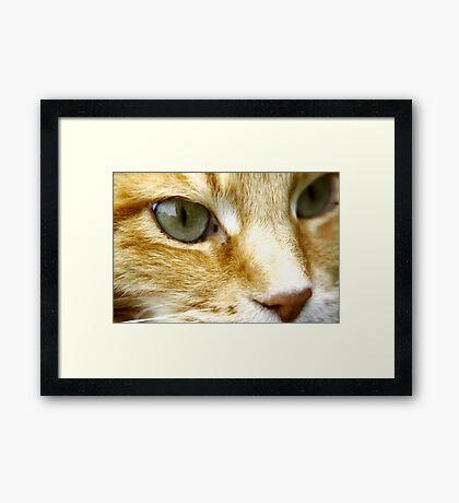 Macro Cat! Framed Print