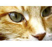 Macro Cat! Photographic Print