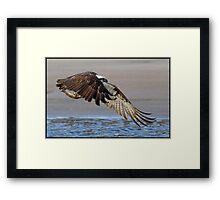Osprey 360 Framed Print